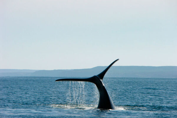 Tour in Puerto Madryn - ATN Travel Services